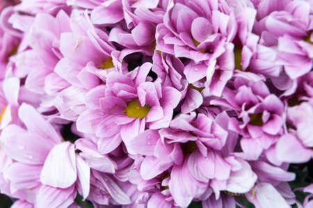 arrange: many purple flowers bouquet arrange for decoration Stock Photo
