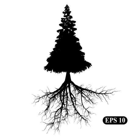 arbol de pino: Silueta de un árbol con las raíces Vectores