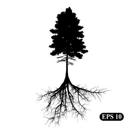 Silhouette eines Baumes mit Wurzeln Standard-Bild - 62518326