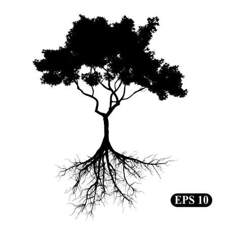 Silhouette eines Baumes mit Wurzeln