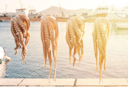 Close up of octopus - traditional greek sea food Reklamní fotografie