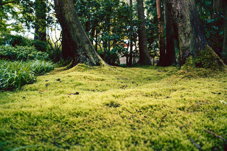 A green undergrowth in the Japanese Tea Garden Banco de Imagens