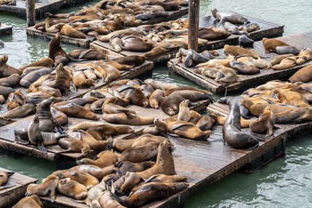 Pier 39 in San Francisco with sea lions. 写真素材