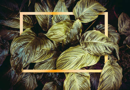 Golden frame on dark green leaves background. 3D illustration 写真素材