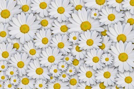 margriet: Daisy achtergrond
