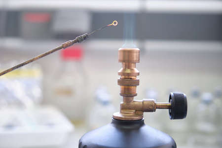 Close up of inoculation loop being sterilized in flame of gas bunsen burner in a laboratory. Laboratory work concept.