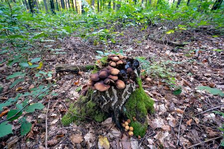 mushrooms standing in the forest in autumn