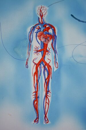 Human figure with blood circulation; artistic drawing with felt-tip Banco de Imagens