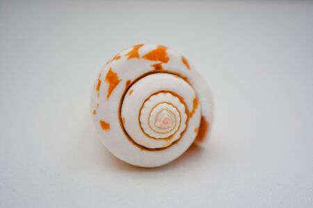 sea shell on white background with a big house Banco de Imagens