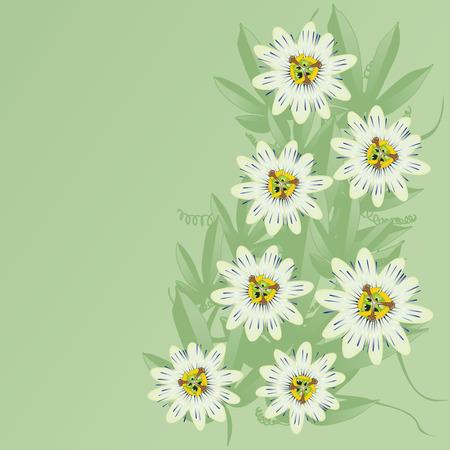 nurseries: passionflower illustration