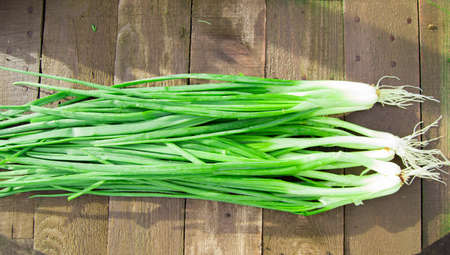 green onions: Bunch of fresh green onions on an old wooden table.