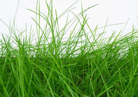 rains: dew drops on green grass closeup on white background. Stock Photo
