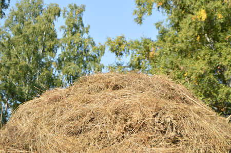 beautiful rustic background with haystack on meadow Stock Photo