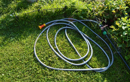 Lawn with green grass and a rubber hose for watering the garden.