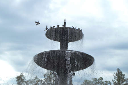Squirt, splash water fountain. Pigeons sit on a city fountain. Stock Photo