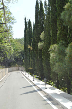 Paved road with lanterns along the cypress alley in the Park on a Sunny summer day Banque d'images