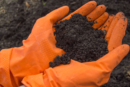 Soil samples in the hands of a biologist in orange gloves. Investigation of the problem of soil pollution.
