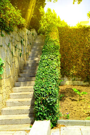 Beautiful stone staircase, steps leading up among the plants and trees in the Park.