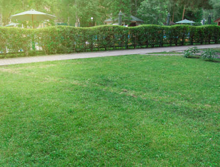 Hedge along the path and lawn with green grass in the Park, picturesque bright sunrise in the city Park in summer. Banco de Imagens