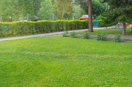 Hedge along the path and lawn with green grass in the Park, scenic views in the city Park in summer.