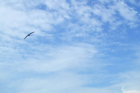 High in the blue sky flying bird Albatross, spreading two wings over the sea.