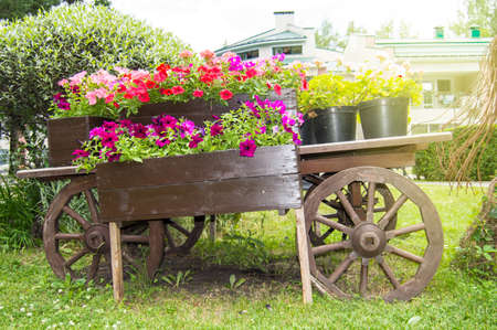 Old wooden vintage trolley with flower pots and boxes with colorful Petunia flowers and geraniums in the garden on a Sunny summer day.