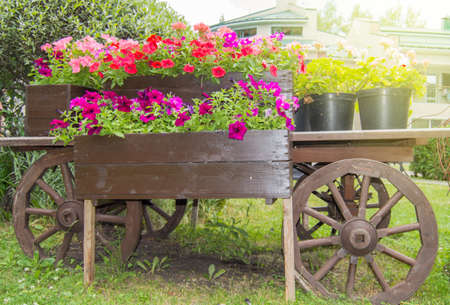 Old wooden vintage trolley with flower pots and boxes with colorful Petunia flowers and geraniums in the garden on a Sunny summer day, close-up