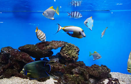 Colorful tropical fish in an aquarium with aquatic plants, corals and neon lights.