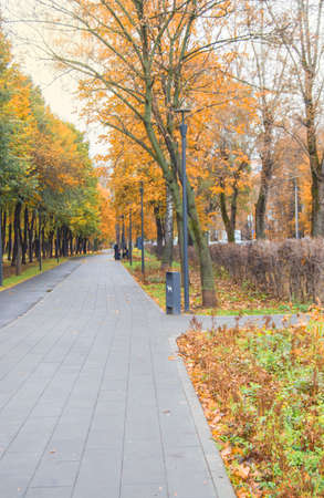 Path through the autumn forest in the city Park, fallen yellow and orange leaves, vertical frame.