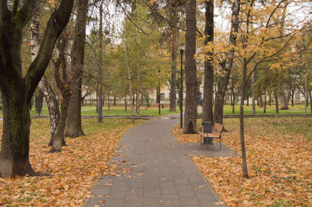 Path through the autumn forest in the city Park, fallen yellow and orange leaves. Фото со стока