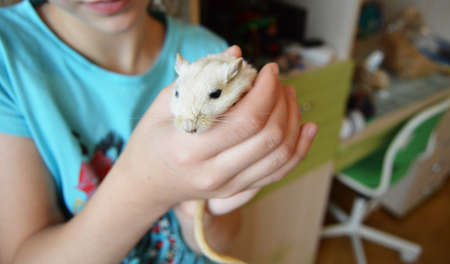 A young teenage girl, carefully holding a small white hamster, mouse, rat. MOUSE-SYMBOL OF 2020 ACCORDING TO THE EASTERN HOROSCOPE.