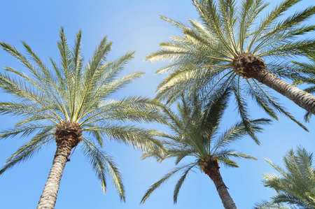 The crown of the palm tree shines brightly tropical sun against the blue sky, the concept of a tropical beach holiday and long trips to exotic countries. Фото со стока