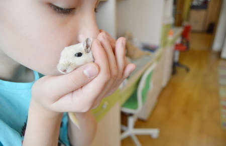 Baby playing with little pet mouse, Little girl holding and kissing pet. Care of children about Pets, Friendship of a teenage girl and a hamster. Фото со стока