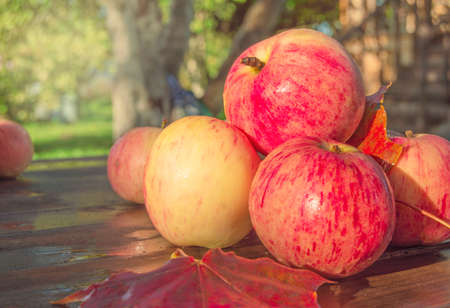 Pile of red ripe apples with maple leaves on wooden background outdoors in garden, glow and blur background of trees and grass on Sunny autumn day, thanksgiving and harvest