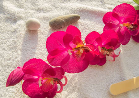 Spa manicure concept, accessories and props for a luxurious procedure, bright sunlight, flat lay