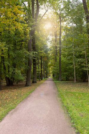 A beautiful alley in a summer shady Park, the sun shines through the tree tops.