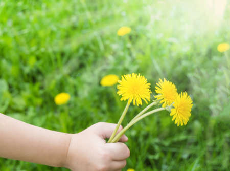 A child's hand holds a dandelion flower close-up, blurred nature background, outdoors. 免版税图像