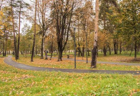 Wet asphalt path in a city Park on a rainy autumn day, outdoors.