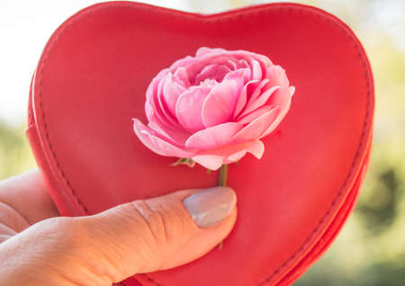 Close-up of a woman hand holding a cosmetic bag in the shape of a heart and a pink rose on a blurry natural background. Фото со стока