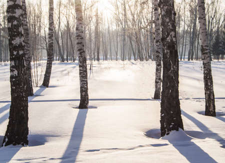 Sunny frosty winter day in the forest, the shadows from the trees form blue lines on the white snow. Banco de Imagens