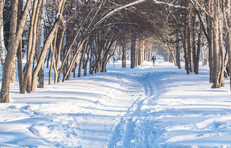 Winter snow-covered alley in the Park, tree branches form an arch, Sunny day