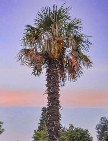 One palm tree on the background of a beautiful sunset, vertical photo.