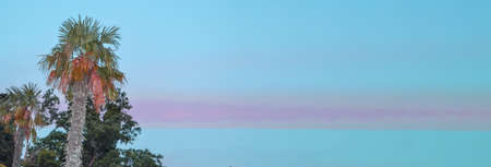 Tropical landscape banner background. Coconut palm against THE BACKGROUND of the SUNSET LILAC SKY, a copy of the space.
