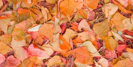 Colorful background image of fallen autumn leaves, orange seasonal background