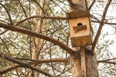 Wooden birdhouse for birds on a tree, early spring in the park