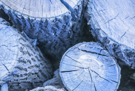 Round log cut with wood texture with crevices and knots, blue tinted wood background
