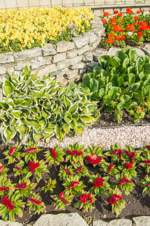 Vertical photo, hosta, red Turkish carnation, yellow levkoi and red geranium on a flower bed, in an open garden with grass on a sunny summer day Stok Fotoğraf