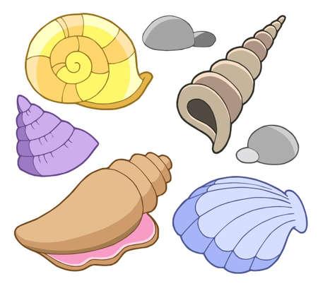 caracolas de mar: Conchas marinas colección - ilustración vectorial. Vectores