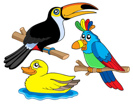 Various birds collection 01 - vector illustration.