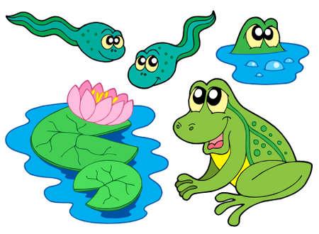 tadpole: Frog collection on white background - vector illustration. Illustration